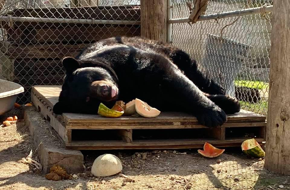 Pooh Bear coma
